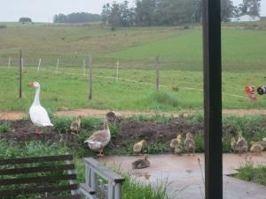 goslings 5