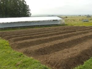 garden progress 6