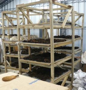lamb shearing 1