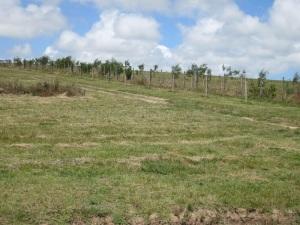 cut pasture 1