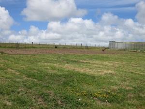 cut pasture 2