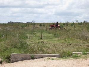 cut pasture 3
