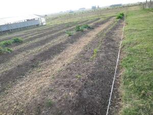 garden plot 3