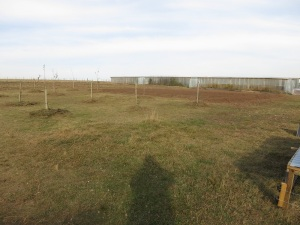 garden plot 4