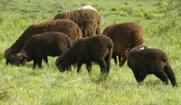 wool portfolio featured 1