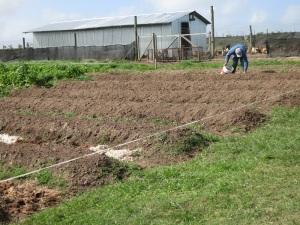 garden plots 1