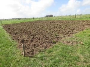 garden plots 3
