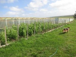 garden plots 7