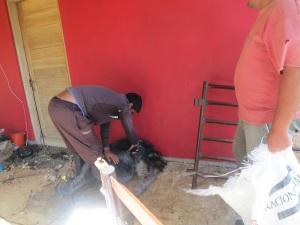 shearing sheep 2