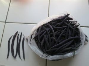 velour beans