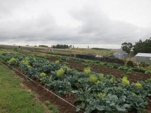 garden 6a