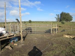 pig yard 4